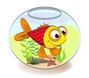 Fish in aquarium. A small red fish the aquarium with plants Stock Photo