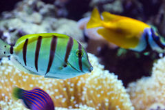 Fish on a aquarium stock photography