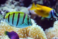 Fish on a aquarium Stock Photography
