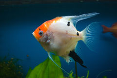 Fish in the Aquarium Royalty Free Stock Photography