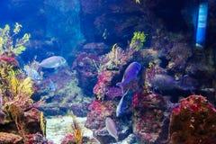 Fish - Aquarium Barcelona Stock Images