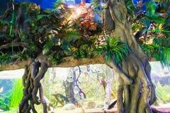 Fish - Aquarium Barcelona Stock Photo