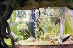 Fish - Aquarium Barcelona Stock Photos