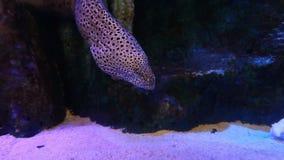 Fish in an aquarium stock footage