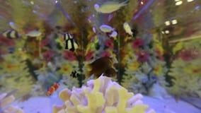 Fish in an aquarium stock video