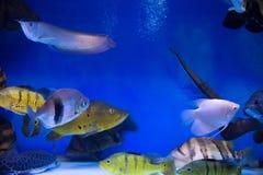 Fish aquarium Royalty Free Stock Image