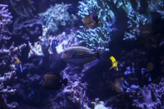 Fish in an aquarium with a coral reef Stock Image