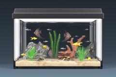Fish aquarium Stock Photos