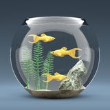 Fish aquarium Royalty Free Stock Photography