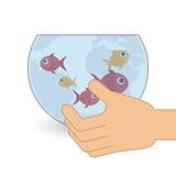 Fish aquarium. Design, vector illustration eps10 graphic Royalty Free Stock Photography