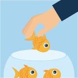 Fish aquarium. Design, vector illustration eps10 graphic Royalty Free Stock Photos