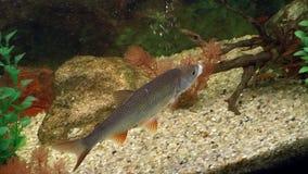 Fish, aquarium fish stock video footage
