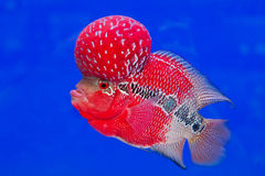 Fish aquarium Royalty Free Stock Photography