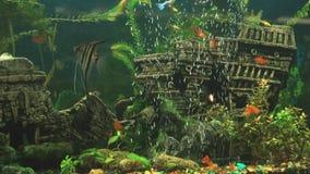 Fish into aquarium in form of ancient sunken ship stock footage