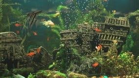 Fish into aquarium in form of ancient sunken ship stock video
