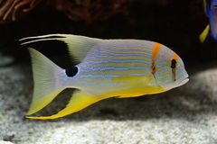 Fish in aquarium in France Stock Photos