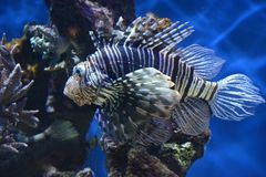 Fish in aquarium in France Royalty Free Stock Photos