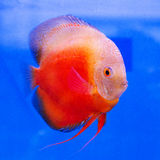 Fish aquarium Stock Images