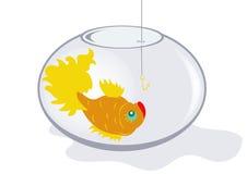 Fish in an aquarium Royalty Free Stock Photo