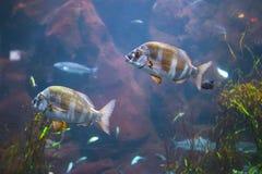 Fish in aquarium with illumination. Close-up view stock photos