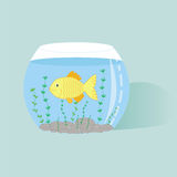 Fish in aquarium. Illustration of fish in aqusrium with water Stock Photography