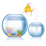 Fish and aquarium. Lonely goldfish jumping to other aquarium, which bigger and more beautiful than the first Royalty Free Stock Photos
