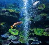 Fish aquarium Royalty Free Stock Images