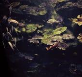 Fish aquarium Royalty Free Stock Photos