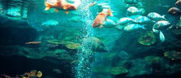 Fish aquarium Stock Photo