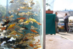 Fish aquarium on a market Stock Photos