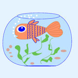 Fish in an aquarium. Orange fish in an aquarium at the blue seamless background Royalty Free Stock Photography
