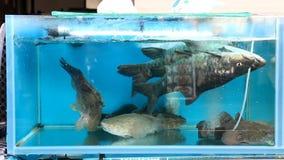 Fish in the aquarium stock video