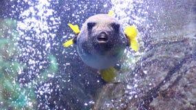 Fish in aquarium Royalty Free Stock Image