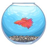 Fish in aquarium. There is red betta fish in the round glass aquarium with pebble ground and blue water. Vector illustration, isolated on white background Royalty Free Stock Photos