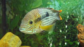 Fish in aquarium stock video