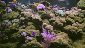 Fish in aquarium. Underwater, Underwater World, corals and beautiful fish stock footage