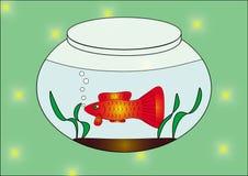 Fish. In the aquarium. vector illustration Stock Image