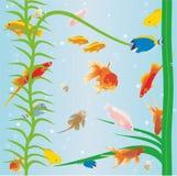 Fish in the aquarium. Wallpaper with fish in an aquarium Stock Photography