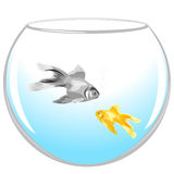 Fish in an aquarium. On white background Royalty Free Stock Photos
