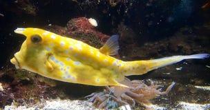 Fish in an aquarium Royalty Free Stock Images