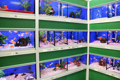 Fish in Aquariums. London, England – Circa July 2014: Tropical and cold water fish for sale in a pet supermarket in England royalty free stock photo