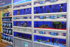 Fish in Aquariums. London, England – Circa July 2014: Tropical and cold water fish for sale in a pet supermarket in England stock photos