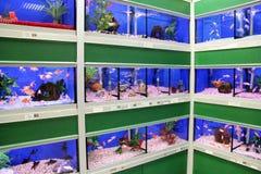 Fish in Aquariums Royalty Free Stock Photo