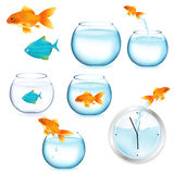 Fish And Aquariums. Vector. Goldfish And Aquariums, Isolated On White Background, Vector Illustration Stock Images