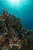 Fish and aquatic life in the Red Sea. Royalty Free Stock Photography