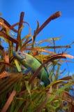 Fish in artificial seaweed Stock Photo