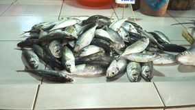 Fish in Asian market. Fresh fish in Asian market. Sale of fresh sea fish in the Asian public store. Sea fish lying on the shopboard at one of the street markets Royalty Free Stock Photography