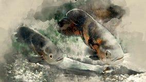 Fish-Astronotus. Astronotus ocellatus clous up. Watercolor background royalty free illustration