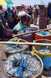 Fish auction Royalty Free Stock Photo