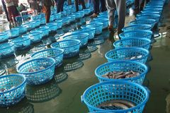 Fish Auction in Taiwan. Buyers inspect the daily catch at a fish auction in Taiwan royalty free stock image